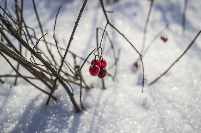 Зима Начинающий фотограф, Nikon d3100, Зима, Фотография, Длиннопост