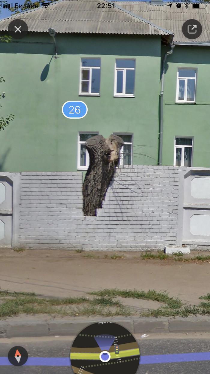 Вторая жизнь пенька Воронеж, Искусство, Дерево, Длиннопост, Фотография