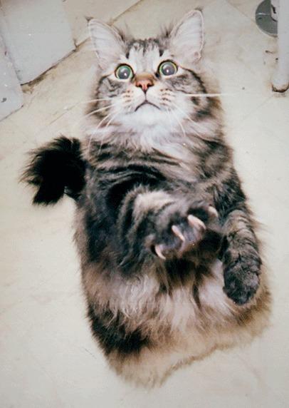 3D котик.
