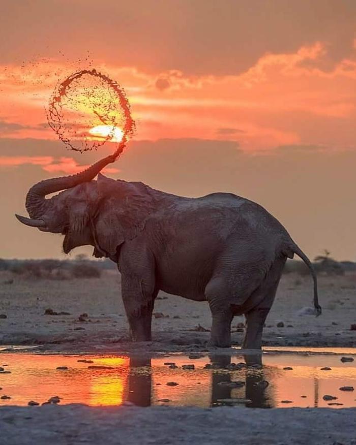 Этот слон мог бы сниматься в рекламе шампуня