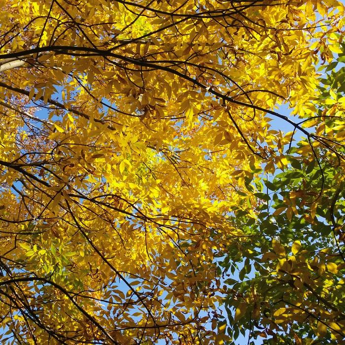 Ранняя осень Осень, Ранняя осень, Фотография, Осенние листья