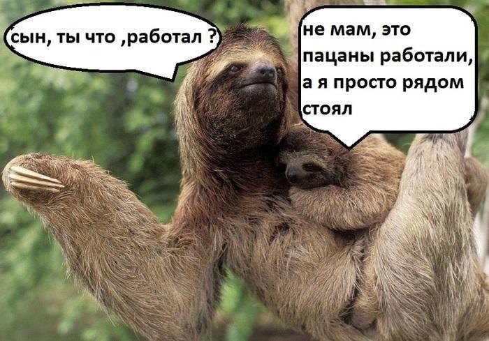 Про ленивцев