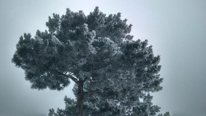Крымский минимализм. Крым, Природа, красота, минимализм, зима, горы