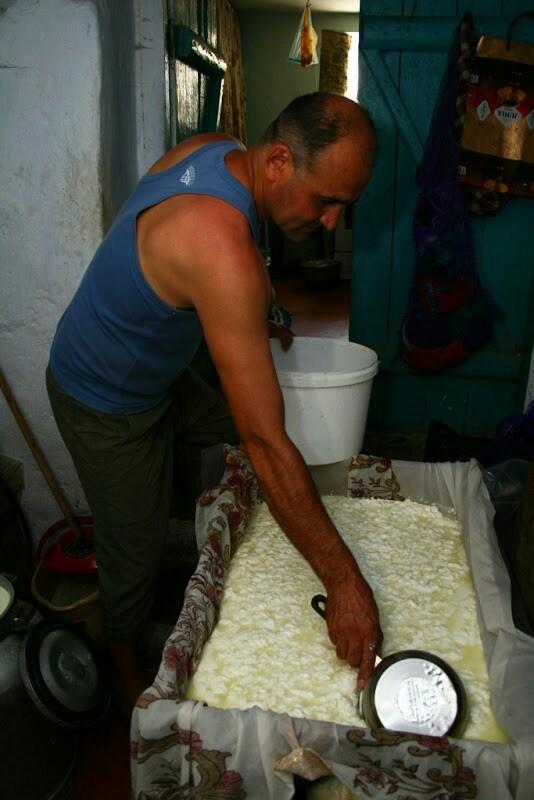 Сирене или Как в Бессарабии делают брынзу болгары, брынза, Южная Бессарабия, молоко, длиннопост