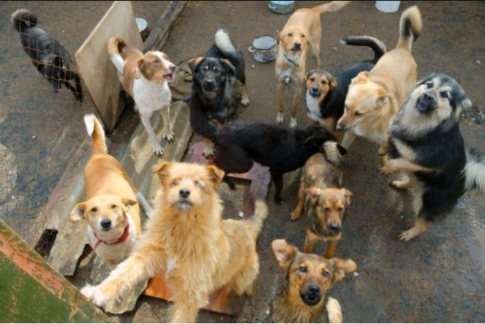 Прикамский бизнесмен подарил жене приют для собак Собаки и люди, Приют для животных, 14 февраля, Подарок
