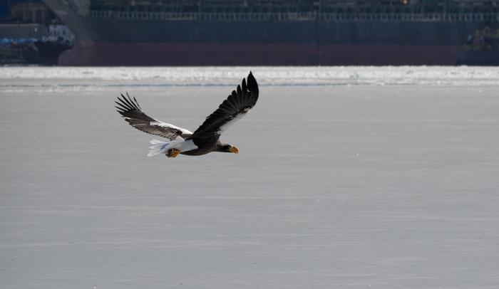 Летящие птицы Птицы, Фотоохота, Летящие птицы, Длиннопост, Фотография