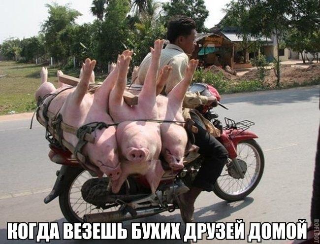 Не настолько уж они и свиньи