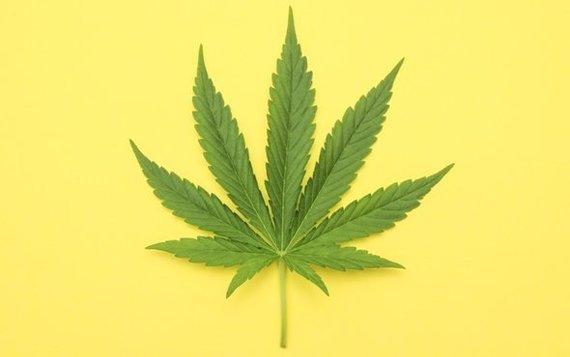 Америка марихуана по рецепту я регулярно курю марихуану