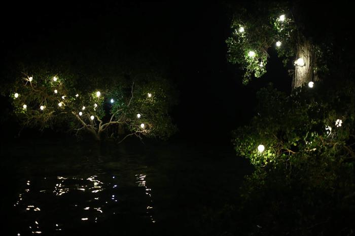 Мангровый лес: крутейший биом планеты филиппины, мангры, geektimes, длиннопост, фотография