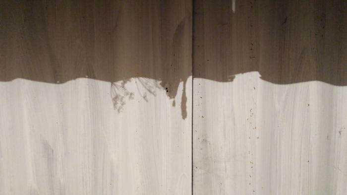 Совпадение тени от засохших растений с расположением лампы и дыр в заборе) Дача, Фотография, Сад, Весна
