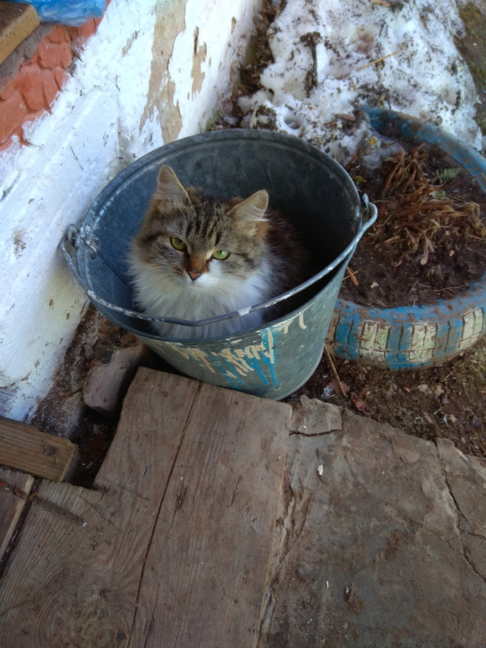 Все кошки одинаковые Кот, Ведро, Коробка, Длиннопост