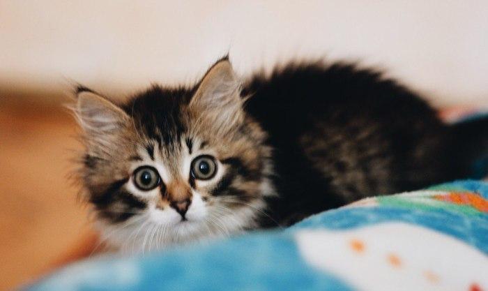 Пост любви к котику:3 Кот, Фотография, Находка, Длиннопост
