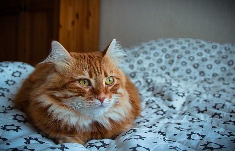 Коты умеют считать и понимают человеческую речь Кот, Счет, Речь, Понимание, Человек, Кот Никифор, Команда, Жесты
