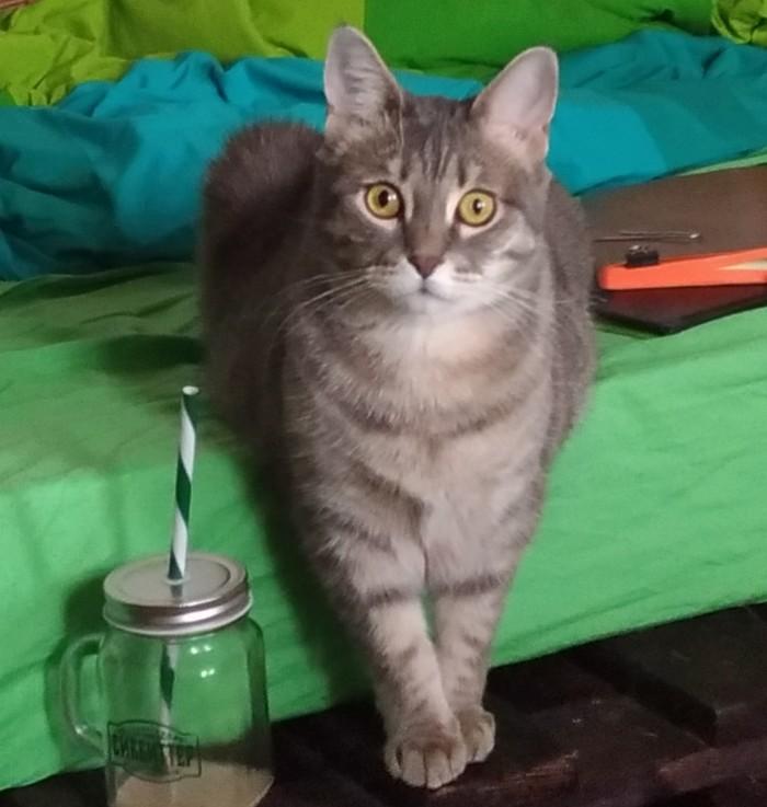 Пропала котя Потерялся кот, Ищу, Длиннопост, Без рейтинга