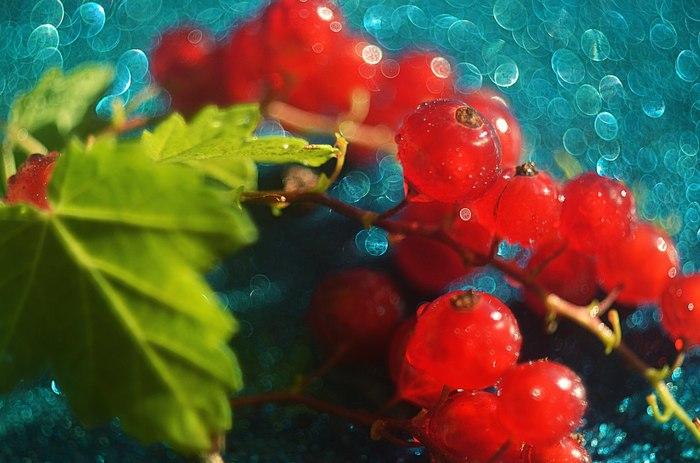 Макросъёмка на советские объективы Фотография, Владлена Лапшина, макросъемка, советские объективы, макрокольца, длиннопост