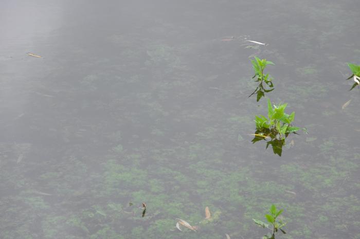 Флора под гладью Вода, Водоросли, Обои на рабочий стол, Растения