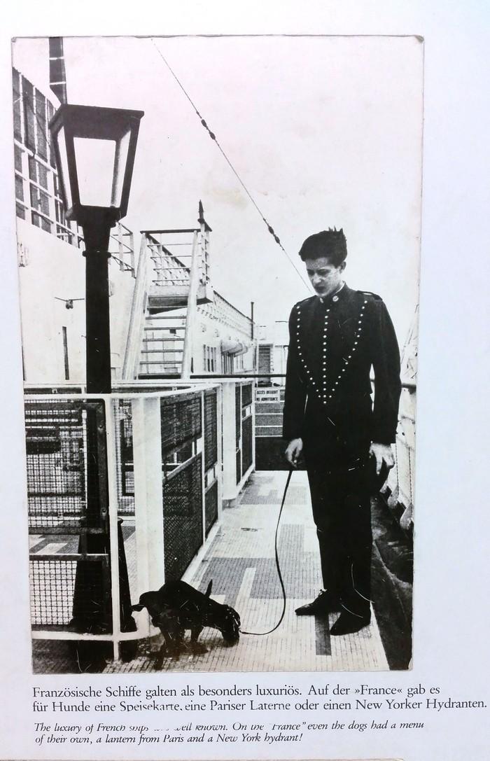 Собачий туалет на трансатлантическом лайнере. Корабль, Туалет, Музей, Люкс, Роскошь, Собака, Животные, Прикол