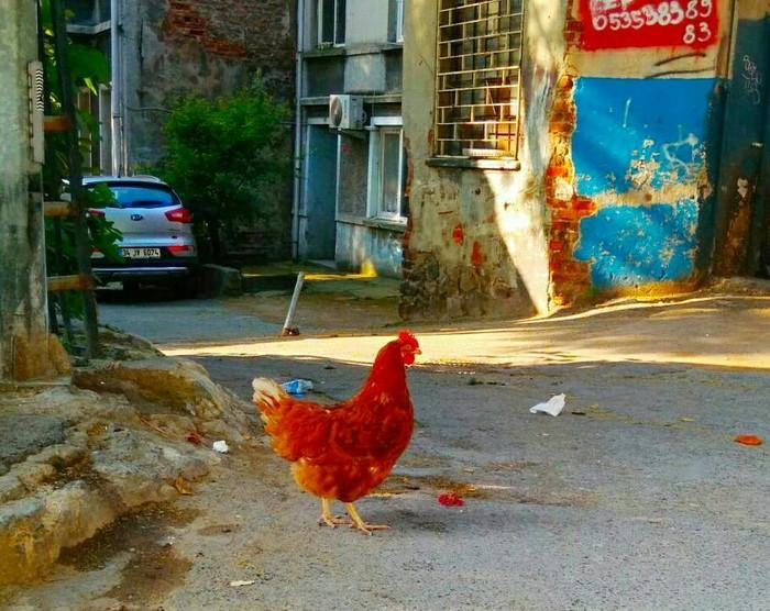 Гуляя по Стамбулу