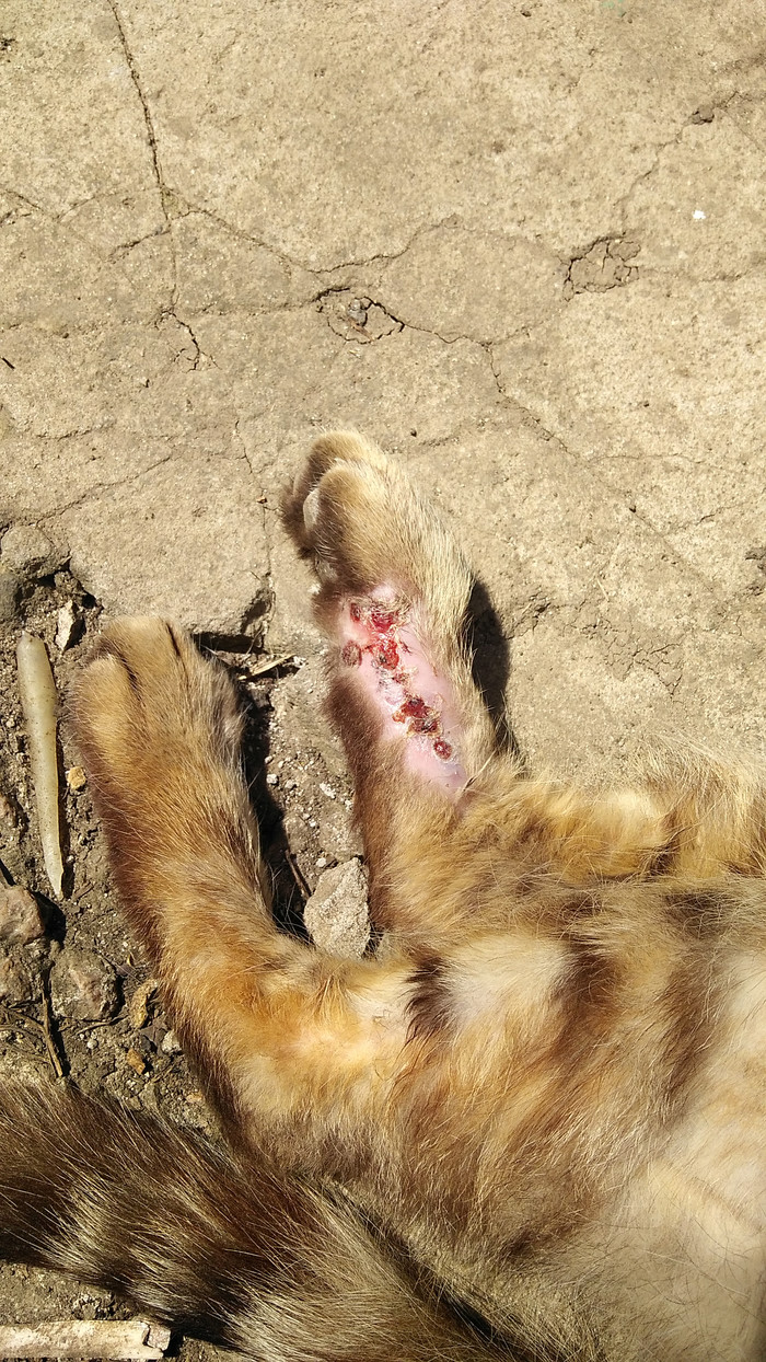 Нужен совет ветеринара Кот, Помощь, Без рейтинга, Длиннопост