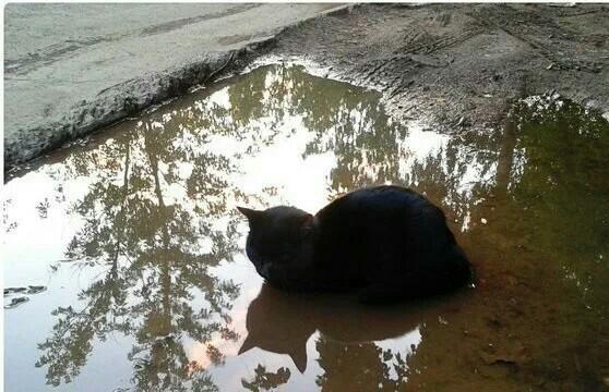 Я островок,у меня лапки Кот, Котомафия, Лужа