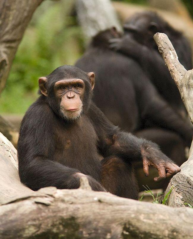 Самые умные животные мира Перевод, Озвучка, Животные, Интеллект, Наука, Длиннопост, Newочем