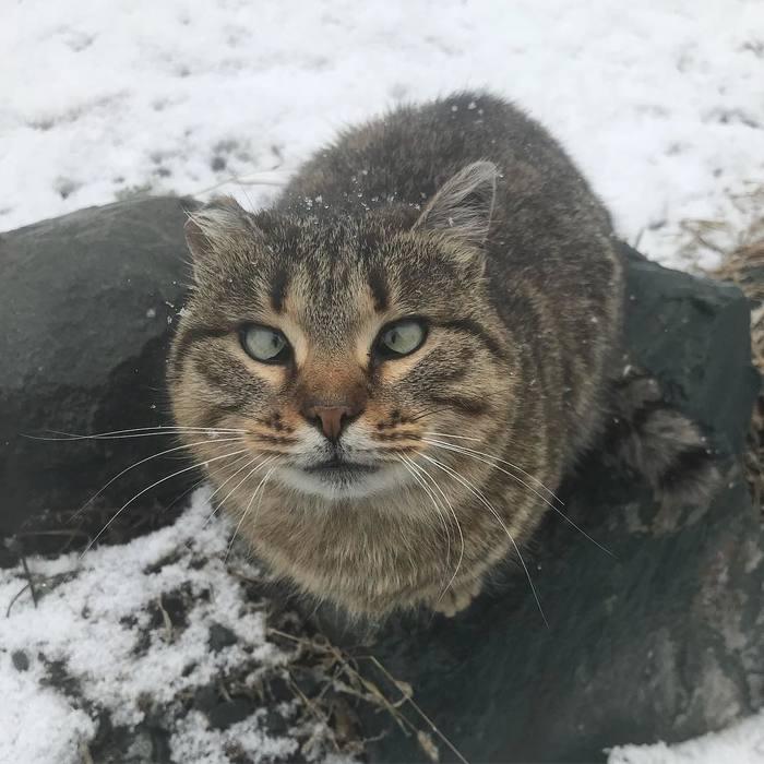 Посмотри в мои глаза Кот, Глаза, Взгляд в душу