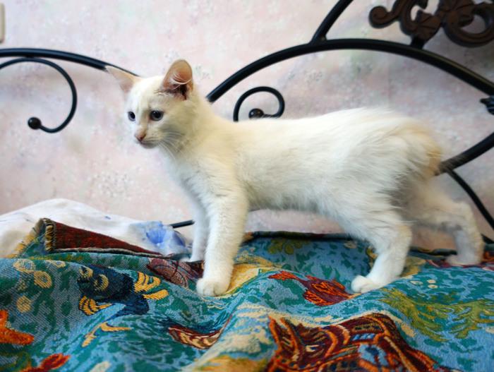 Если вы давно хотели завести котенка, но ждали знака, то вот он! Котята ищут себе хозяев. Челябинск.
