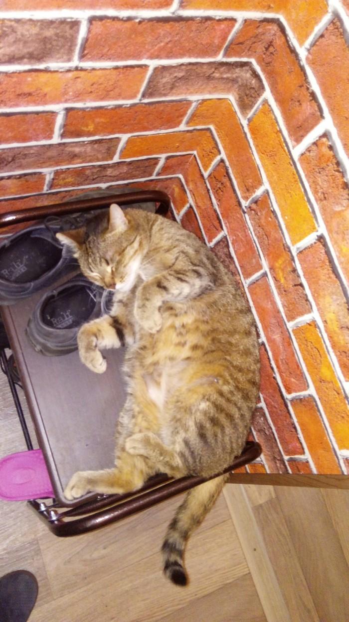 Толстый котег Кот, Толстый, Сончас, Позитив