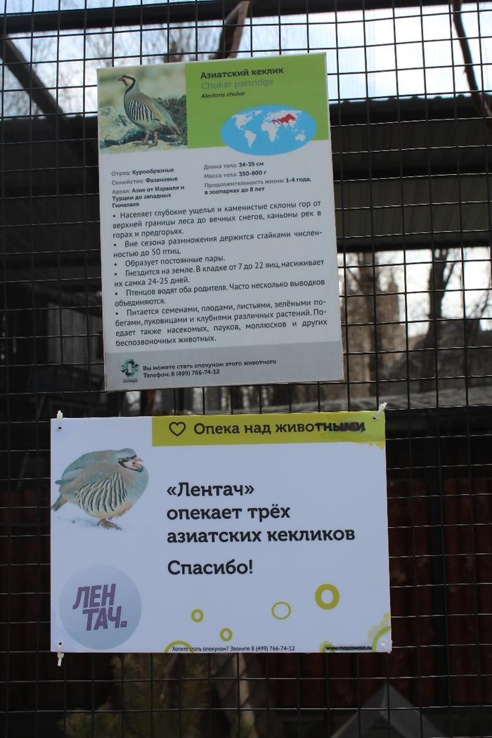 Лентач стал опекуном кекликов в Московском зоопарке Лентач, Московский зоопарк, Кеклики, Милота, Длиннопост