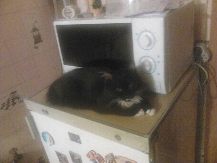 Пропал кот. Смоленск. Кот, Смоленск, Потерялся кот, Домашние животные, Помощь, Без рейтинга, Длиннопост