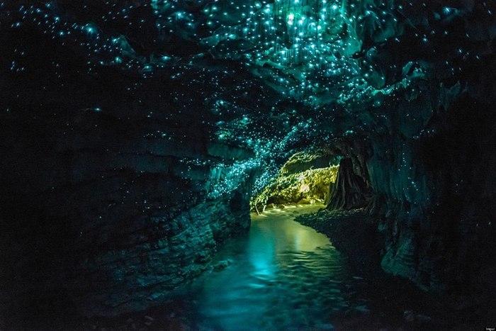 Светящиеся пещеры Вайтомо в Новой Зеландии Новая зеландия, Пещеры, Удивительное, Фотография, Лучшее, Длиннопост