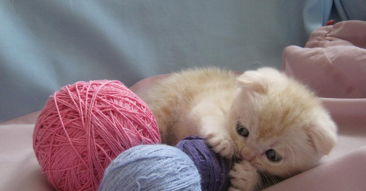 картинки клубочки для котенка