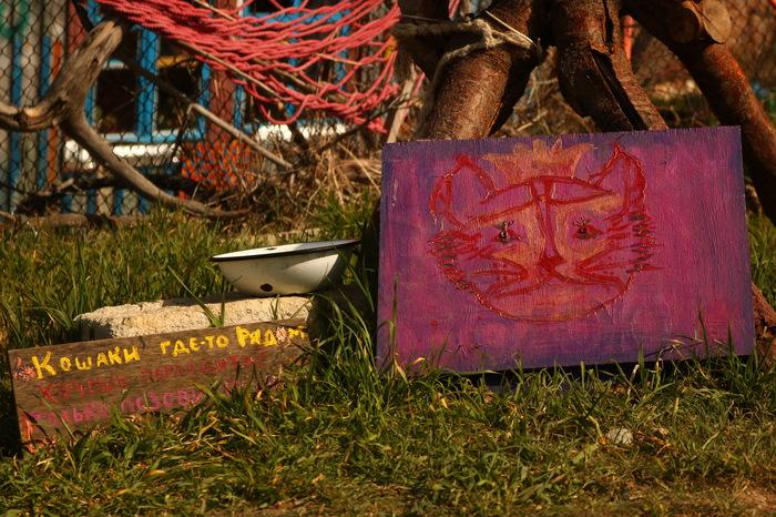 Кошачий рай. Балаклава, Кот, Кошкин дом, Чудо-Домики, Длиннопост, Фотография
