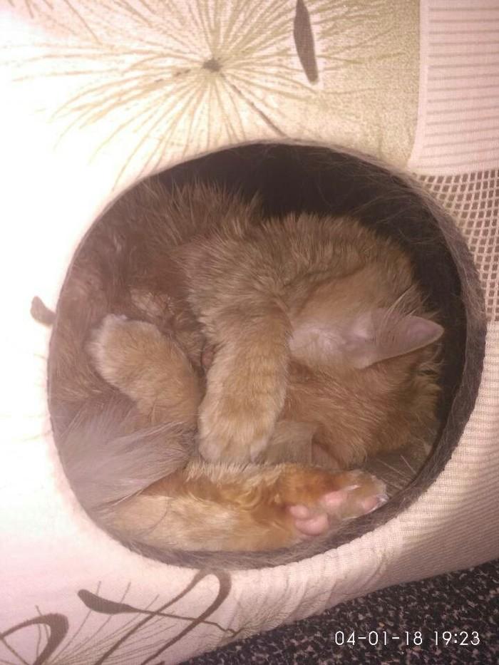 Кот в своей недвижимости Свой дом, Длиннопост, Кот, В домике, Фотография