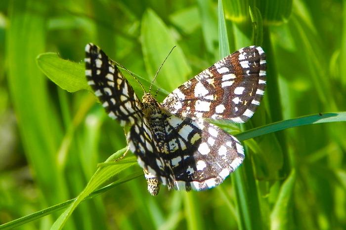 Бабочки. №1 Фотография, Макросъемка, Бабочка, Длиннопост