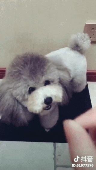 Как в Китае собак дрессируют Собака, Дрессировка, Юмор, Нож, Угроза, Рука, Домашние животные, Гифка