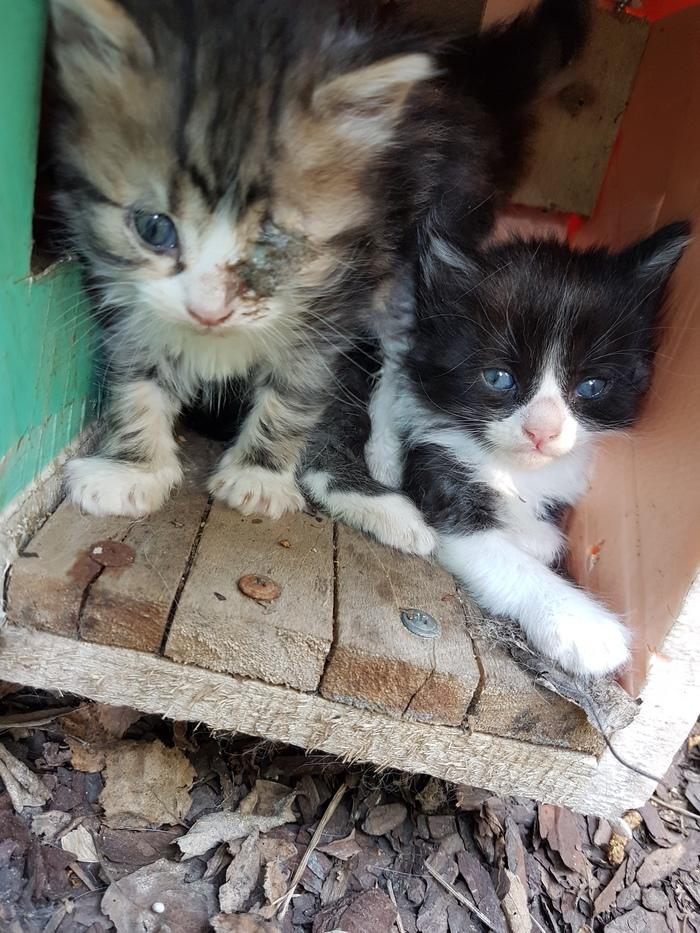 Помогите советом как помочь котёнку Кот, Помощь животным, Без рейтинга, Негатив, Ростов-На-Дону, Жесть