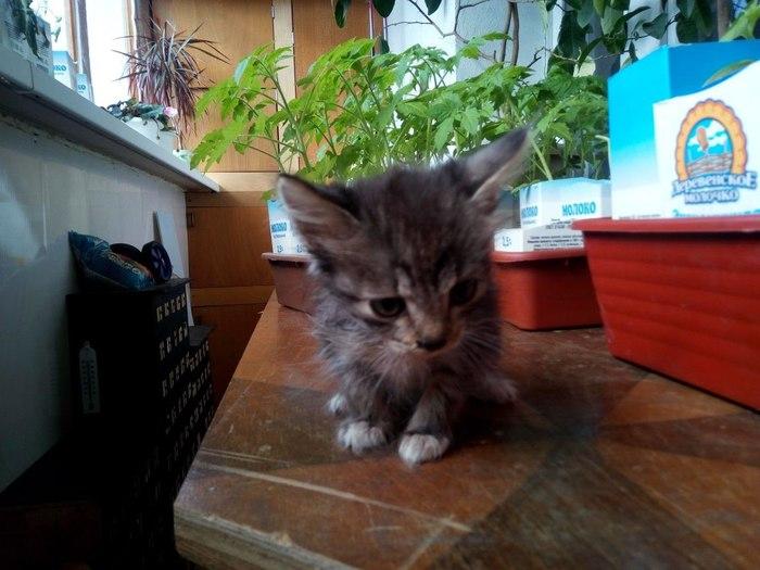 Новосибирцы забрали из службы по отлову животных котят, из-за которых эвакуировали электричку