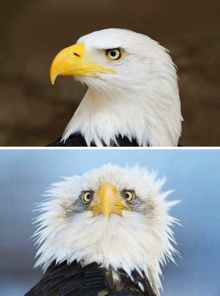 Вы когда-нибудь задумывались, почему орланов на гербах изображают в профиль?