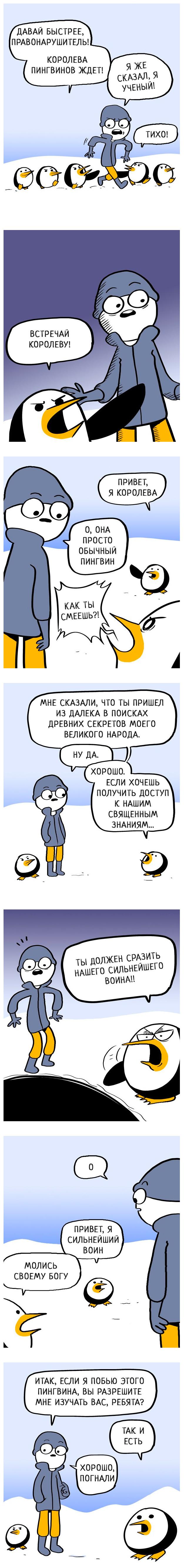 Пингвин против ученого Гифка с предысторией, Перевод, Imgur, Гифка, Длиннопост