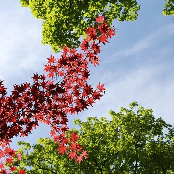 Город в красно-зеленых тонах Мюнхен, Природа, Весна, Фотография, Клен, Длиннопост