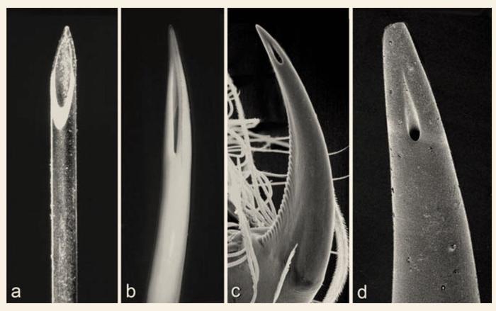 Фото рот спермоприемник — pic 15