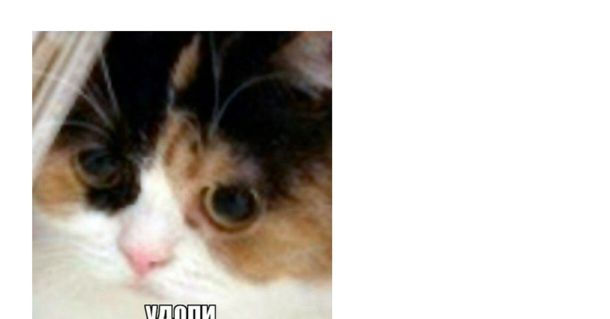 зодиакального затем картинка кот изделия