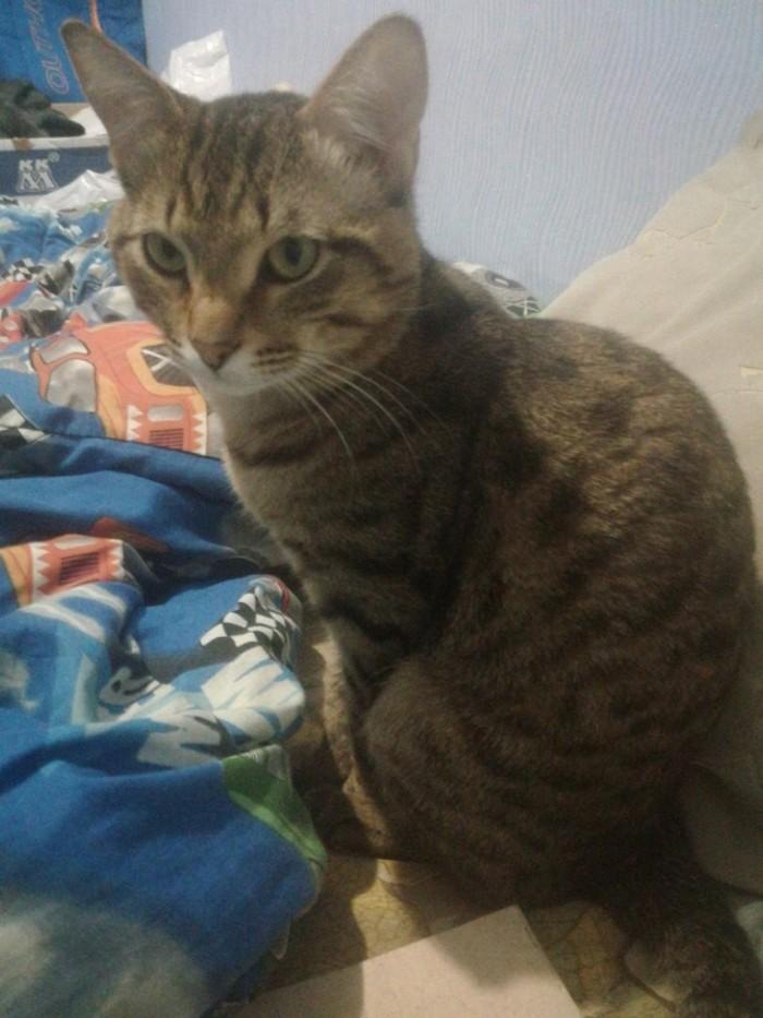 Кошки тоже плачут Разные котики, Плакса, Домашние животные, Животные тоже люди, Кот, Длиннопост