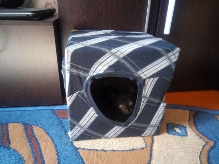Домик для кота Кот, Кошкин дом, Котята, Длиннопост