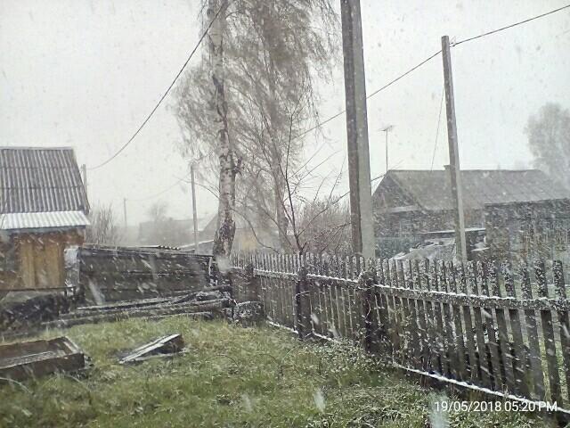 Прокопьевск.19 мая. Погода, Май, Снег