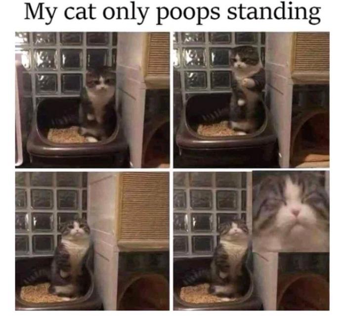 Моя кошечка какает только стоя