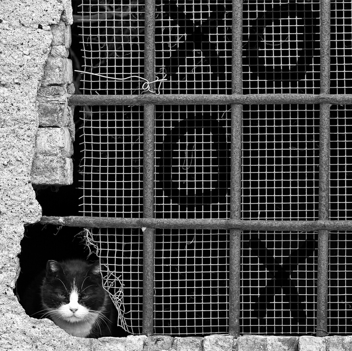 Чувак с ghetto. Кот, Брутал 80lvl, Фотография