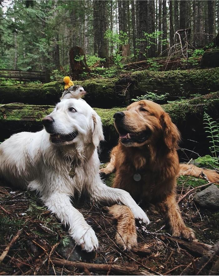 Хорошие друзья! Собака, Ёжик, Лес, домашние животные, instagram, watki