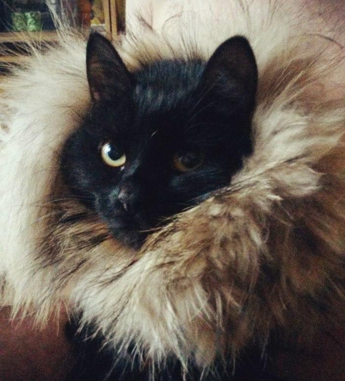 Как в доме завелось Счастье Домашние животные, Кот, Любовь к животным, Длиннопост